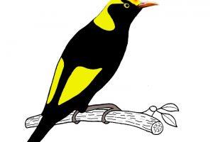 Manning Great Lakes Birdwatchers Inc